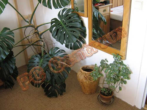 Basket, mirror and plants